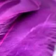 plumaMORADO